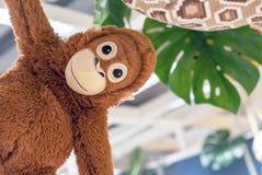 Soft toy orange monkey in the toy store stock photos
