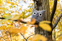 Soft toy owl is placed in autumn forest Stock Image