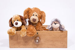 Soft toys in a draw. Various soft toys in an antique draw isolated against white background Stock Photos