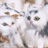 Soft toys kittens sitting in front of the camera. Soft toys white kittens sitting in front of the camera stock photos