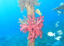 Soft tree coral stock photography