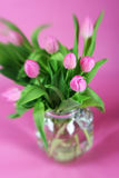 Soft Tulips Royalty Free Stock Images