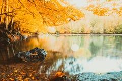 Soft view autumn landscape, autumnal park, fall nature. Royalty Free Stock Photos