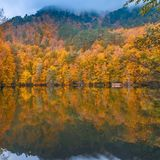 Soft view autumn landscape, autumnal park, fall nature. Soft view of autumn landscape, dry trees, golden sky, tree reflected in lake.Digital structure of Stock Photos