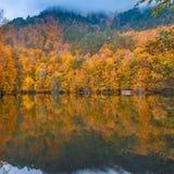 Soft view autumn landscape, autumnal park, fall nature. Stock Photos