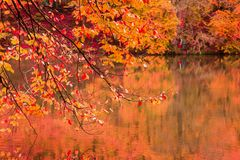 Soft view autumn landscape, autumnal park, fall nature. Royalty Free Stock Image