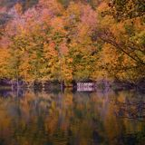 Soft view autumn landscape, autumnal park, fall nature.