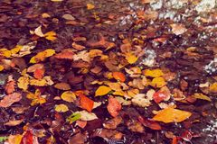 Soft view autumn landscape, autumnal park, fall nature. Soft view of autumn multicolored leaves on the puddle water surface with reflections.Autumnal park, fall Stock Photos