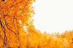 Soft view autumn landscape, autumnal park, fall nature. Stock Image