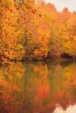 Soft view autumn landscape, autumnal park, fall nature. Stock Photography