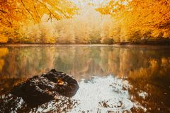 Soft view autumn landscape, autumnal park, fall nature. Soft view of autumn landscape, dry trees, golden sky, tree reflected in lake.Digital structure of Royalty Free Stock Images