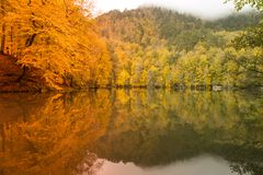 Soft view autumn landscape, autumnal park, fall nature. Royalty Free Stock Photography