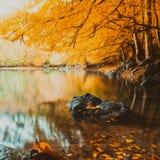 Soft view autumn landscape, autumnal park, fall nature. royalty free illustration