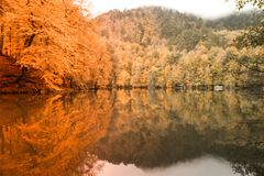Soft view autumn landscape, autumnal park, fall nature. Royalty Free Stock Images