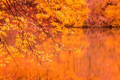 Soft view autumn landscape, autumnal park, fall nature. Royalty Free Stock Photo