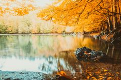 Soft view autumn landscape, autumnal park, fall nature. Stock Images