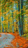 Trees around small road and dry leaves on  ground Royalty Free Stock Photo