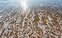 Soft wave of the sea on the sandy beach Stock Photography