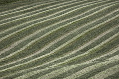 Soft waves. Of lines in agriculture stock photos