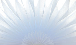 Soft White Floral Tissue with soft backlight Stock Photo