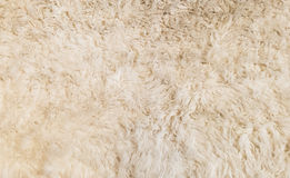 Soft White Fur Background Texture for Furniture Material Royalty Free Stock Photo