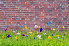 Soft Wild Flowers in Grass Royalty Free Stock Photography