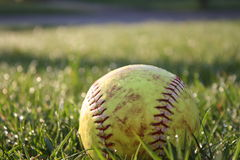 Used Softball in dewy grass stock photography