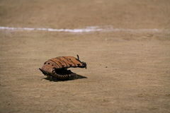 Softball in dirt glove. Softball in dirt at a game girls Stock Image