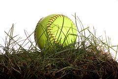 Softball in Grass. Yellow Softball sitting in grass isolated on white Royalty Free Stock Photo