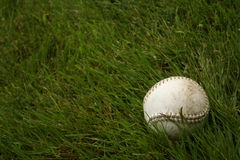 Softball in grass. Softball sitting on a field of grass Royalty Free Stock Photo