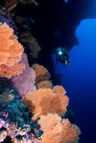 Softcoral and diver Stock Photography