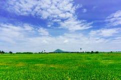 Softlight de la opinión del paisaje de la sol de la palma de toddy y del arroz-fi Foto de archivo