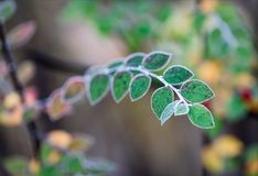 Softly outlined leaves on a frosty autumn morning. Near Gentofte lake Royalty Free Stock Photo