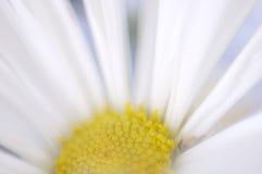 Softness Fotografia de Stock