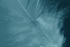 Softness. Close-up of a white feather on a blue background. Macro photograph: shallow depth of field Royalty Free Stock Photos