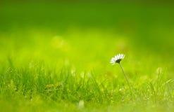 Softness do quintal Imagem de Stock