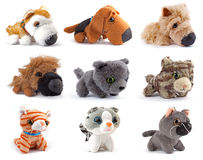 Softness Toys. Cats and dogs royalty free stock photo