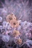Softnessblomma - fluffig blomma royaltyfri bild