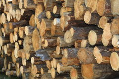 Softwood firewood. Softwood lumber ready to cut into firewood Royalty Free Stock Photos