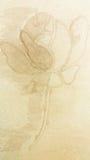 Sogar hat eine Rose seine dunkle Seite Stockbild