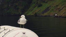 Soggiorno bianco del gabbiano sulla nave in montagne con il giorno di estate verde della foresta Uccello di mare nave Gabbiano di archivi video