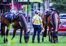 Soggiorno dell'ufficiale della poliziotta del Nuovo Galles del Sud con il suo cavallo a Sydney CBD fotografia stock
