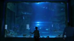 Soggiorno della donna vicino al grande carro armato dell'acquario, guardante il pesce stock footage