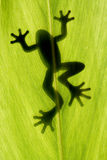 Soggiorno della rana sul foglio Immagini Stock Libere da Diritti