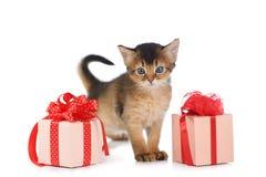 Soggiorno somalo sveglio del gattino vicino ad una scatola attuale fotografie stock