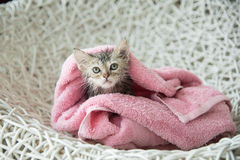 Soggy kitten after a bath Royalty Free Stock Photos