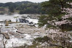 Waterfall and flowers. Sogi waterfall and cherry blossoms in Kagoshima Royalty Free Stock Photos