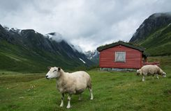 Landscape in Sogn og Fjordane, Norway Royalty Free Stock Image