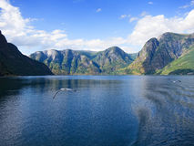 Free Sogne Fjord Stock Photos - 45799463