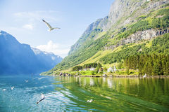 Sognefjord in Norway, natural landscape Royalty Free Stock Photos